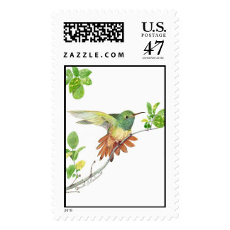 buff bellied postage stamp