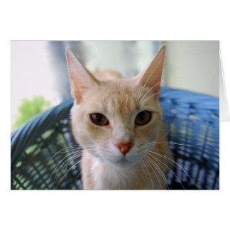 Buff Oriental Shorthair Cat Greeting Card