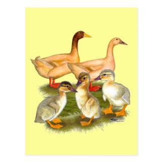 Buff Orpington Duck Family Postcard