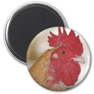 buff orpington rooster magnet