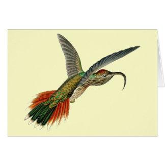 Buff-tailed Sicklebill Hummingbird - Ernst Haeckel Card