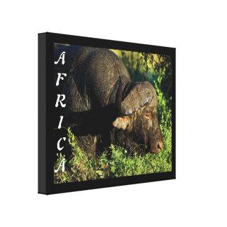 Buffalo African safari animals Canvas Prints