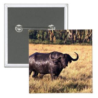 Buffalo after a mud bath buttons