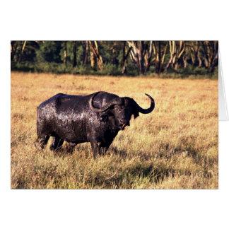 Buffalo after a mud bath cards