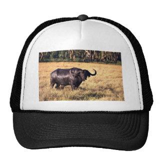 Buffalo after a mud bath trucker hats