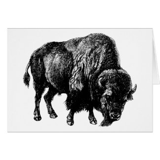 Buffalo American Bison Vintage Wood Engraving Card