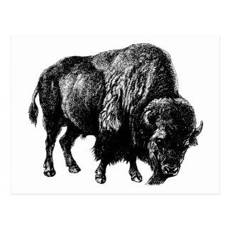 Buffalo American Bison Vintage Wood Engraving Postcard