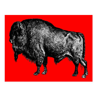 Buffalo American Bison Vintage Wood Engraving Postcard