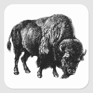 Buffalo American Bison Vintage Wood Engraving Square Sticker