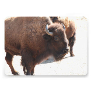 Buffalo and Bison Personalized Invitation