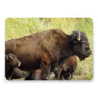 Buffalo and Bison Personalized Announcements