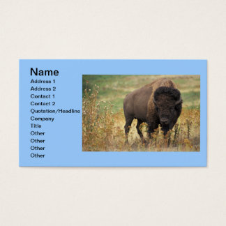 Buffalo Animal Art Indian Office Business Business Card