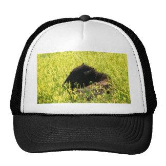 Buffalo at Rest Trucker Hat