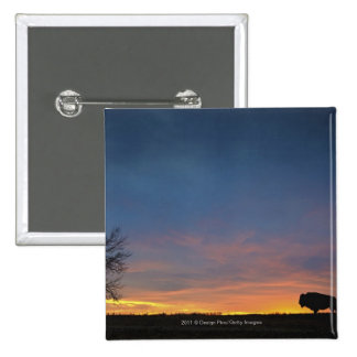 Buffalo At Sunset In Elk Island National Park 2 Inch Square Button