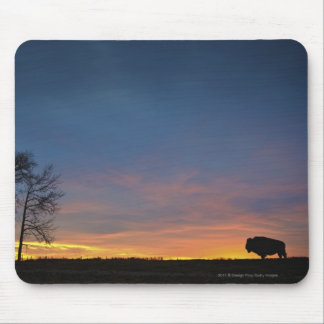 Buffalo At Sunset In Elk Island National Park Mouse Pad