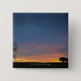 Buffalo At Sunset In Elk Island National Park Pinback Button