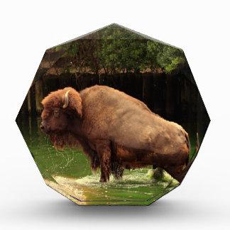 Buffalo (Bison) Acrylic Award