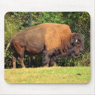 Buffalo (Bison) Kansas, Oklahoma, Wyoming Mouse Pad
