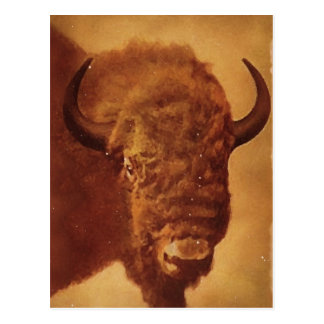 Buffalo / Bison Post Cards