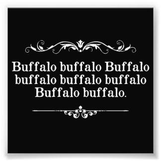 Buffalo Buffalo Sentence Photograph