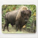Buffalo Bull 1 Mousepads