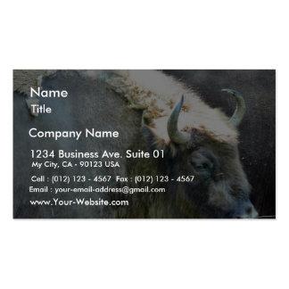 Buffalo Business Card Templates