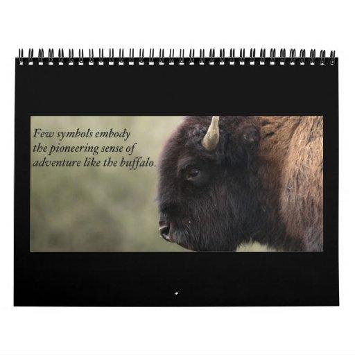 Buffalo Calendar 2013