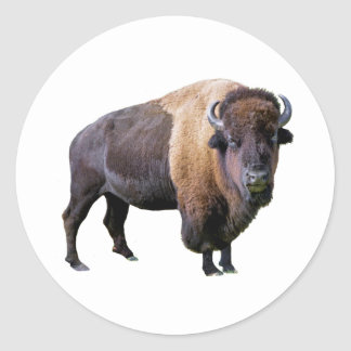 buffalo classic round sticker
