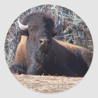 buffalo cute guy stickers
