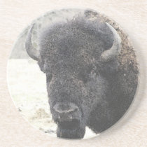 Buffalo Drink Coaster