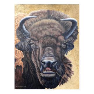 Buffalo Eating Postcard