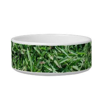 Buffalo grass bowl