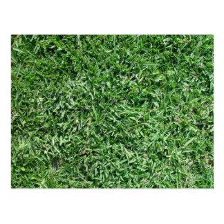 Buffalo grass postcard