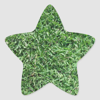Buffalo grass star sticker