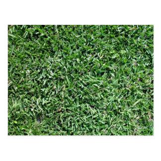 Buffalo grass texture postcard