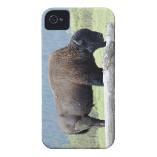 Buffalo grazing Case-Mate iPhone 4 case