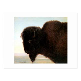Buffalo Head art Albert Bierstadt bison painting Postcard