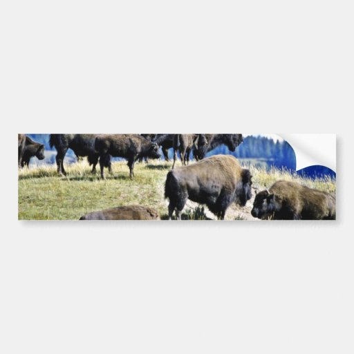 Buffalo Herd - Yellowstone National Park Bumper Sticker