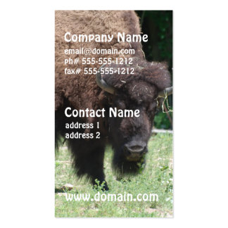 Buffalo in Field Double-Sided Standard Business Cards (Pack Of 100)