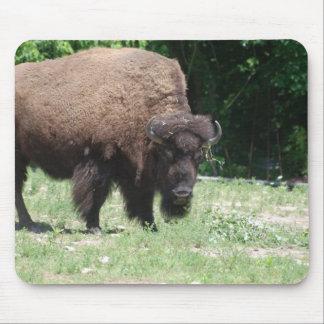Buffalo in Field Mouse Pad