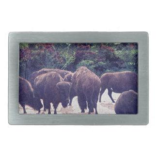 Buffalo in Golden Gate Park Vintage Postcard Belt Buckle