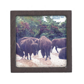 Buffalo in Golden Gate Park Vintage Postcard Keepsake Box