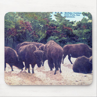 Buffalo in Golden Gate Park Vintage Postcard Mouse Pad