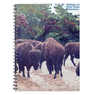Buffalo in Golden Gate Park Vintage Postcard Spiral Notebook