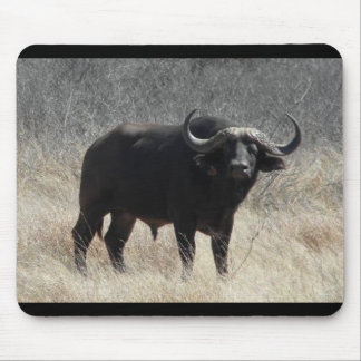 Buffalo In South Africa Mouse Pad