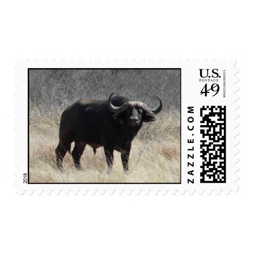 Buffalo In South Africa Postage Stamps