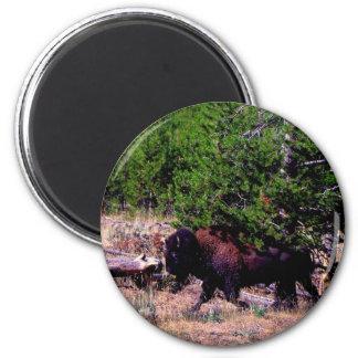 Buffalo in Yellowstone 2 Inch Round Magnet