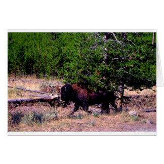 Buffalo in Yellowstone Card