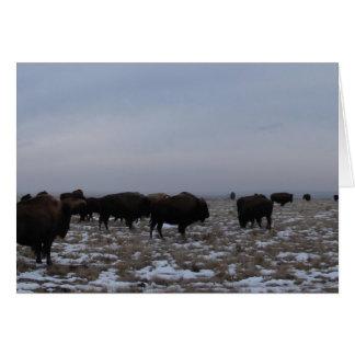 Buffalo-Logan County, Kansas Cards