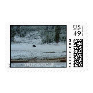 Buffalo Loner Postage Stamp